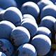 Blå druer del 1